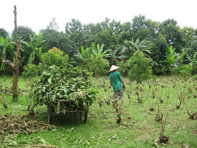 mahepõllumajandus